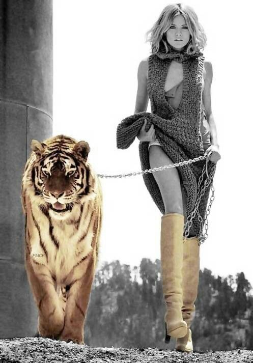 Tiger on a Gold Leash
